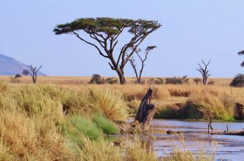 The Tanzanian Safari for a Honeymoon or a Romantic Escape Unlike Any Other
